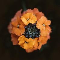 messa a fuoco selettiva fotografia di fiori d'arancio