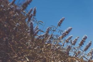 cespuglio di fiori viola foto