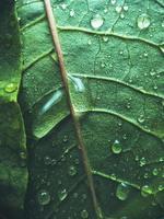 foglia verde con gocce d'acqua foto