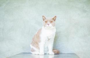 foto del gatto