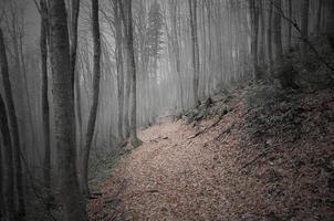 foresta di montagna. foto