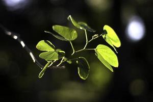 rama con hojas iluminadas por el sol