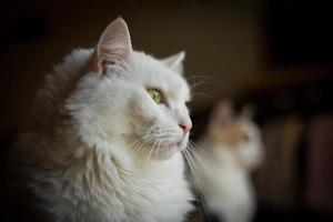 gatti di profilo foto