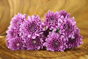 crisantemo viola su fondo di legno
