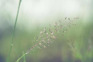 strutture di sfocatura morbida erba in fiore foto