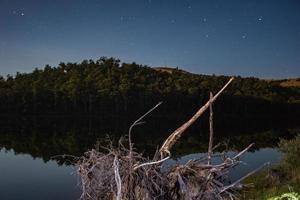 legno alla deriva vicino al fiume di notte foto