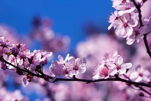 sbocciano in primavera