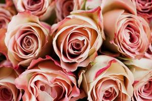 belle rose foto