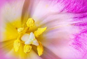 fiore di orchidea rosa utilizzato come sfondo foto