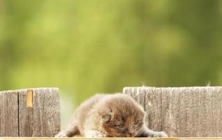 gattino affascinante foto