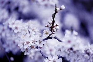 i frutti sbocciano, primavera