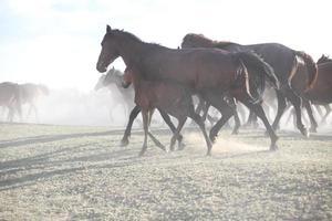 criniera del bambino, cavallo selvaggio - immagine stock foto