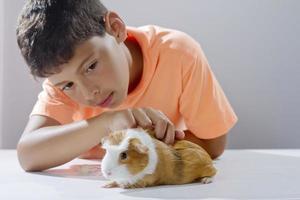 ragazzo che guarda il suo animale domestico cavia foto