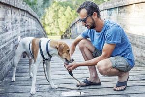 il cane beve dalle mani del suo padrone foto