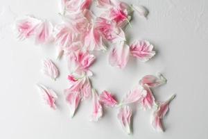sfondo di petali di paeonia foto