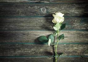 rosa su fondo in legno foto