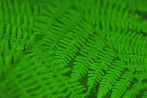 sfondo di foglie di felce