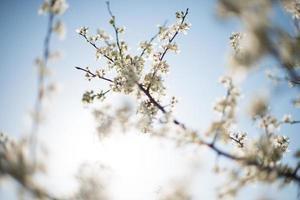 albero con petali bianchi foto