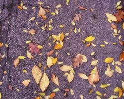 cadono le foglie sul marciapiede foto