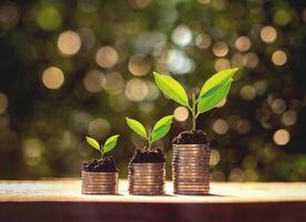 monete impilate con pianta che cresce a gradini foto