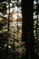 luce solare attraverso gli alberi foto