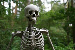 primo piano dello scheletro all'esterno foto