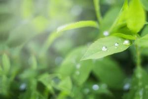 goccioline di pioggia foto