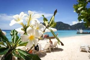 fiore di plumeria su sfondo spiaggia tropicale