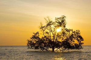 albero in mare