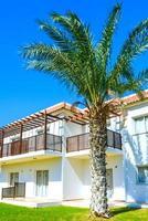 costruzione di piante di palma verde foto