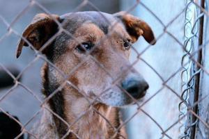 cane in rifugio foto