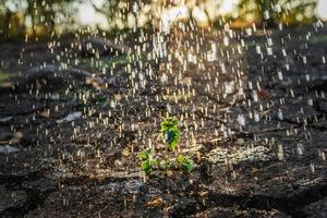piccola pianta sotto la pioggia