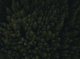 fotografia aerea di alberi verdi foto