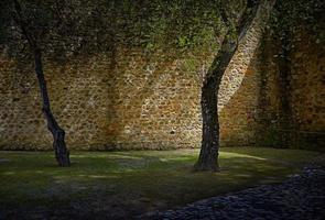 muro di mattoni marrone foto