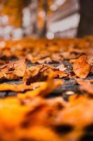 foglie secche marroni foto