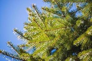 albero dalle foglie verdi