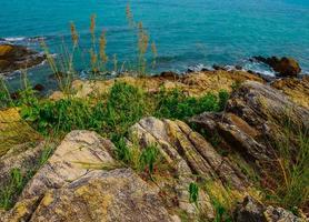 erba sulle rocce accanto all'oceano foto