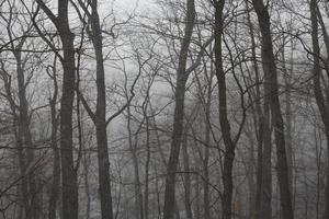 foresta nebbiosa in inverno