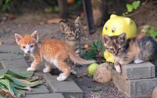 gattini in un giardino