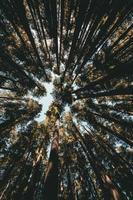 foresta durante il giorno foto
