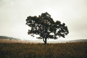 albero verde solista sotto il cielo bianco