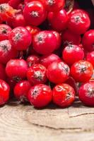 frutta fresca di biancospino. il concetto di medicina alternativa. foto