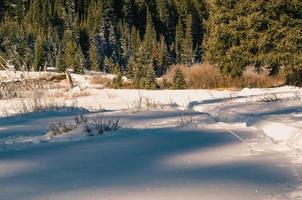 terreno coperto di neve vicino agli alberi foto