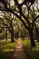 percorso tra gli alberi durante il giorno foto