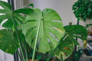 primo piano di piante a foglia verde foto