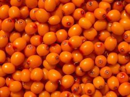 sfondo di bacche di olivello spinoso. foto