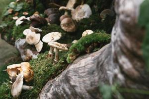 fungo nella foresta foto