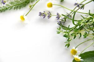 erbe aromatiche foto
