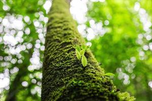 foglie fresche di primavera verde foto