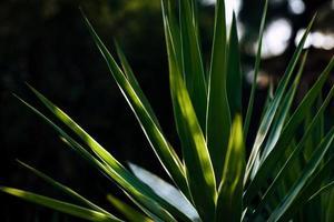 pianta verde nella fotografia ravvicinata